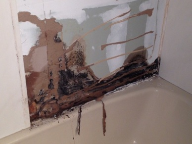 Whatever You Need Handyman Services